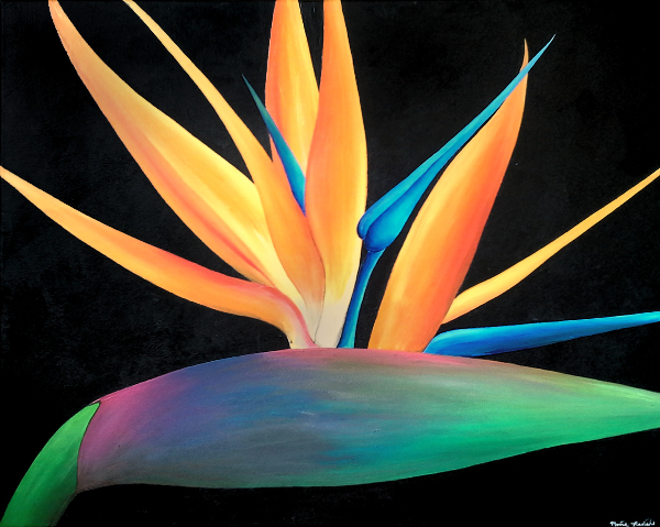 Painting of a bird of paradise flower with a black background